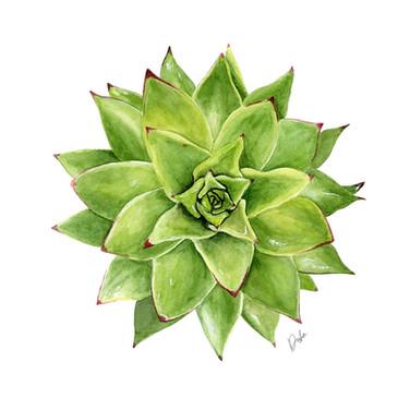 Green Watercolor Succulent Illustration