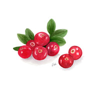 Cranberries Illustration