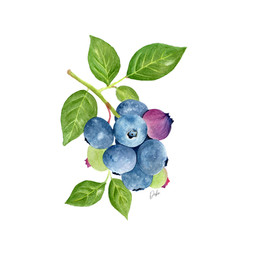 Blueberry Bunch