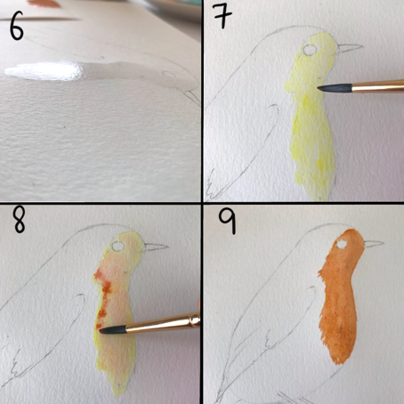 Watercolor steps to paint robin bird