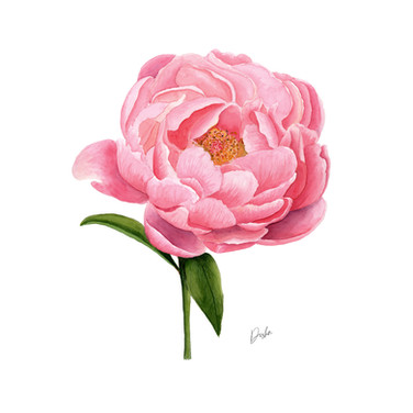 Watercolor Peony Illustration