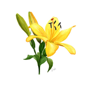 Yellow Lily_lowres.jpg