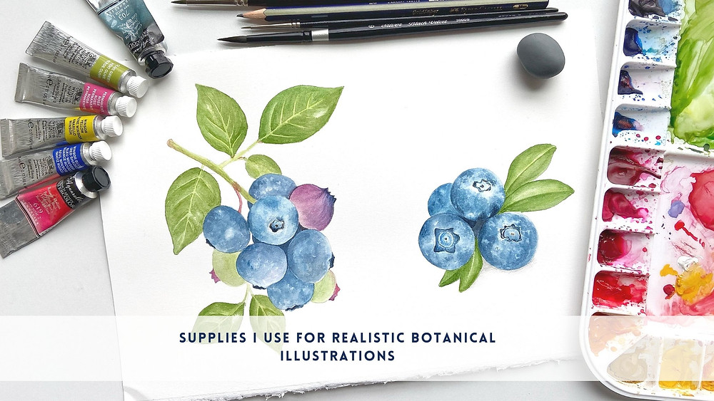 Supplies I use for Realistic Botanical Illustrations and paintings