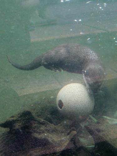 X-Small Otters.jpg