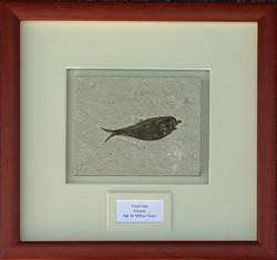 Framed Fossil.