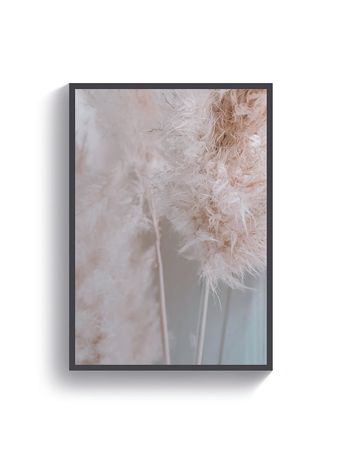 Pampas Feathers