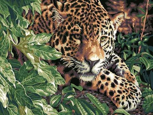 Леопард в зарослях