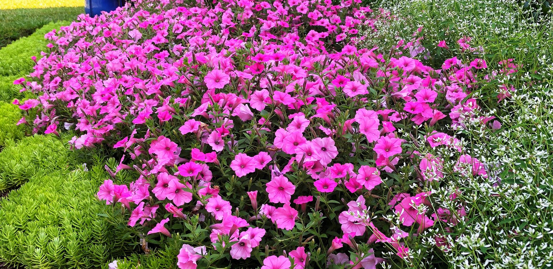 Endless Blooms