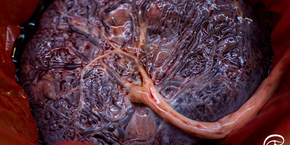 Curso Medicina da Placenta Hanami