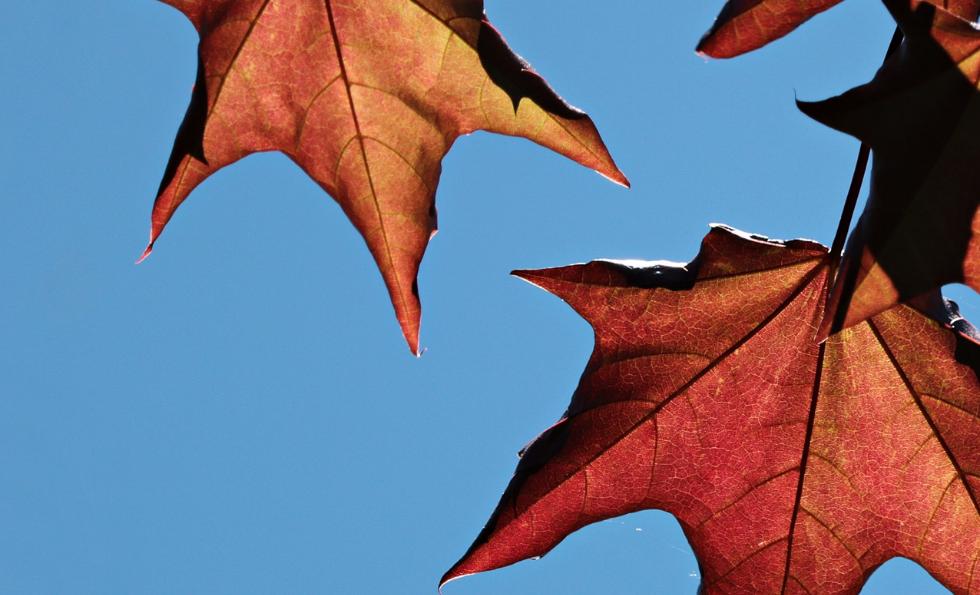 ¡¡El otoño 2021 ya empezó (1).png