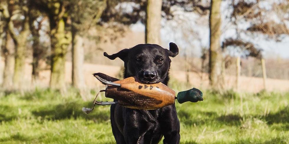 Labrador Working Test Training & Test