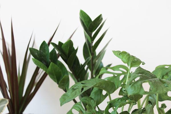 PLANTEE PLANT CLUB 4