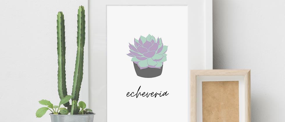 Echeveria Print