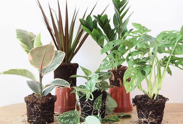 PLANTEE PLANT CLUB 2