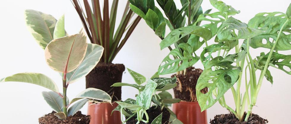 Plantee Plant Club