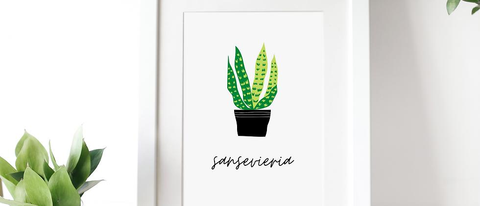 Sansevieria Print