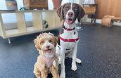 Puppy Socialization Sessions_edited.jpg