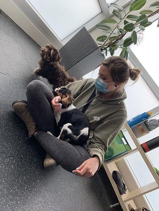 Small Puppy Socialization Training