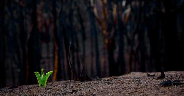 几个月来澳大利亚山火肆虐,牵动着无数人的心。为了帮助受灾地区的人们更方便地了解相关信息,解决他们在灾后重建中可能遇到的各种法律问题,我们特汇总了下列信息并随时提供法律帮助。