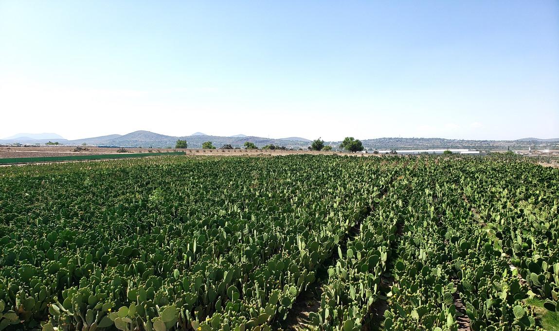 Cactus Power Cultivos