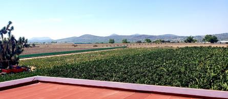 Cultivo de Nopal Mexico