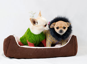 dogs in sweater