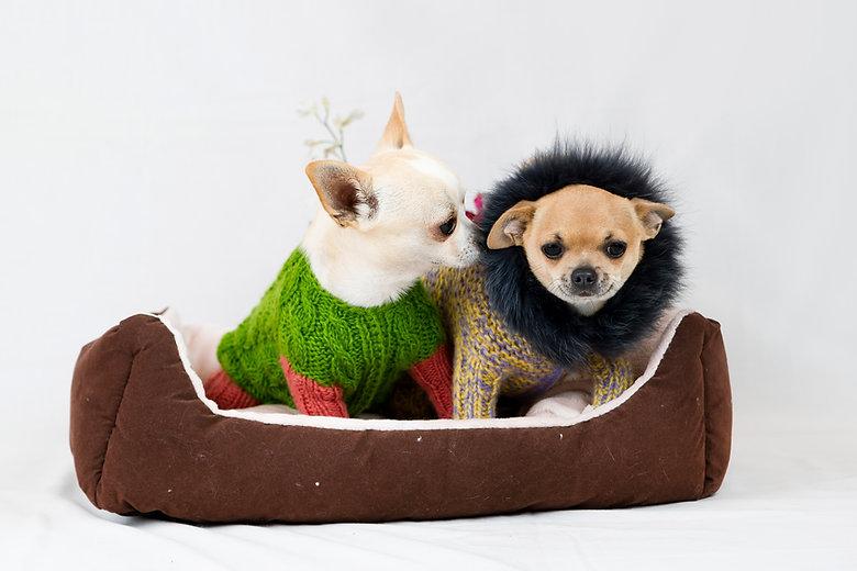 Adoptable pups