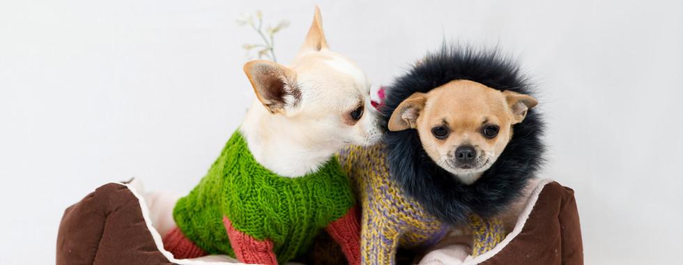 セーターで犬