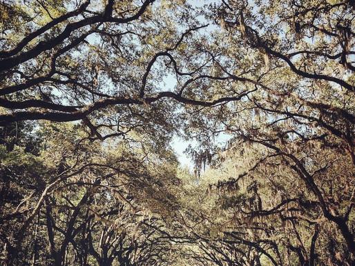 Ни рай, ни ад не будут явлены нам больше, чем теперь: отрывок из «Листьев травы» Уитмена