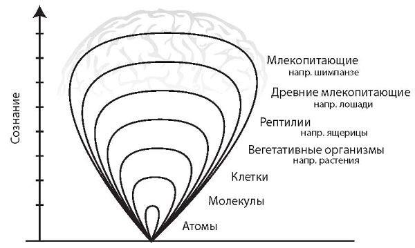 Рис. 2. Чем выше сложность организации материи, тем больше (глубже) сознание