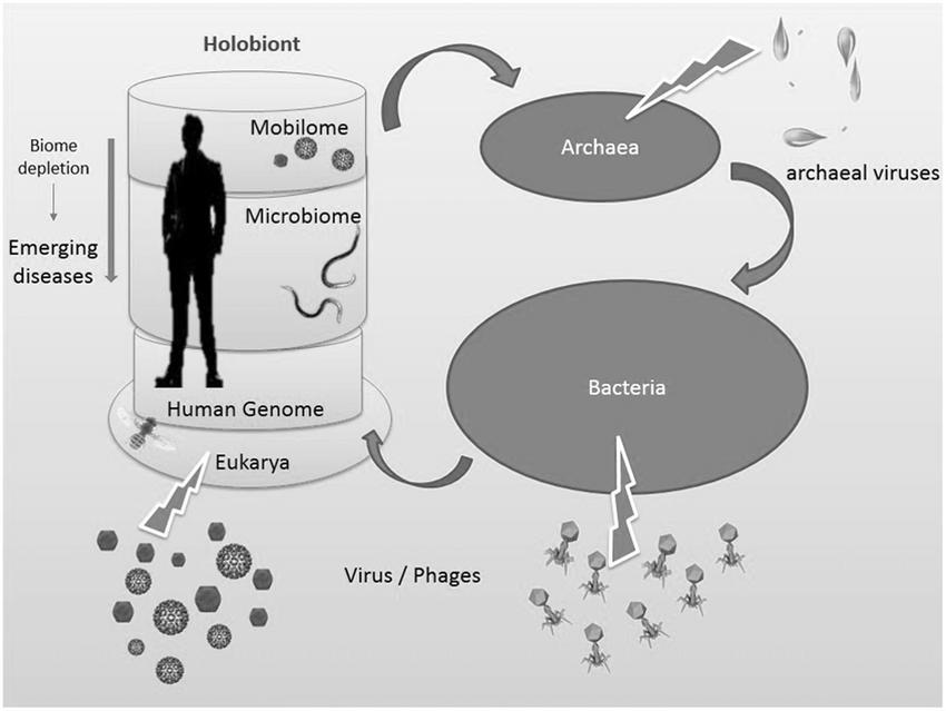 Человеческий холобионт. Источник: Salvucci E. Microbiome, holobiont and the net of life // Critical Reviews in Microbiology. — 2016. 42(3): 485–494.