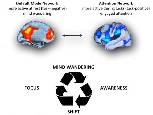 Блуждающий ум и тренировка внимания