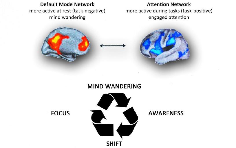 Блуждание ума — осознавание — изменение сознания — фокусировка на чём-то. Переключение от сети пассивного режимя (DMN) к сети внимательности (Attention Network)