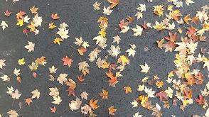 Leaves 3 Fall Zoe Vandermeer photo 10.28