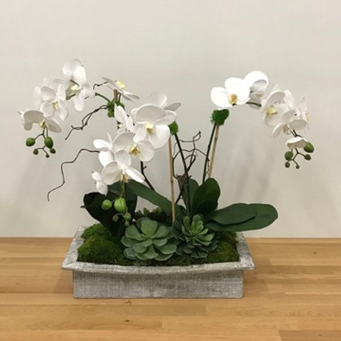 ORCHIDS IN XLG GREY BOX