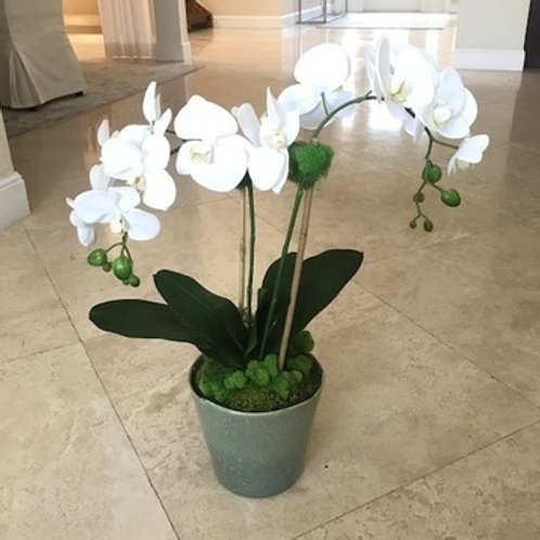 ORCHID IN GLAZED GREEN POT
