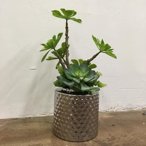 Green Succulent in Silver Dimpled Vase