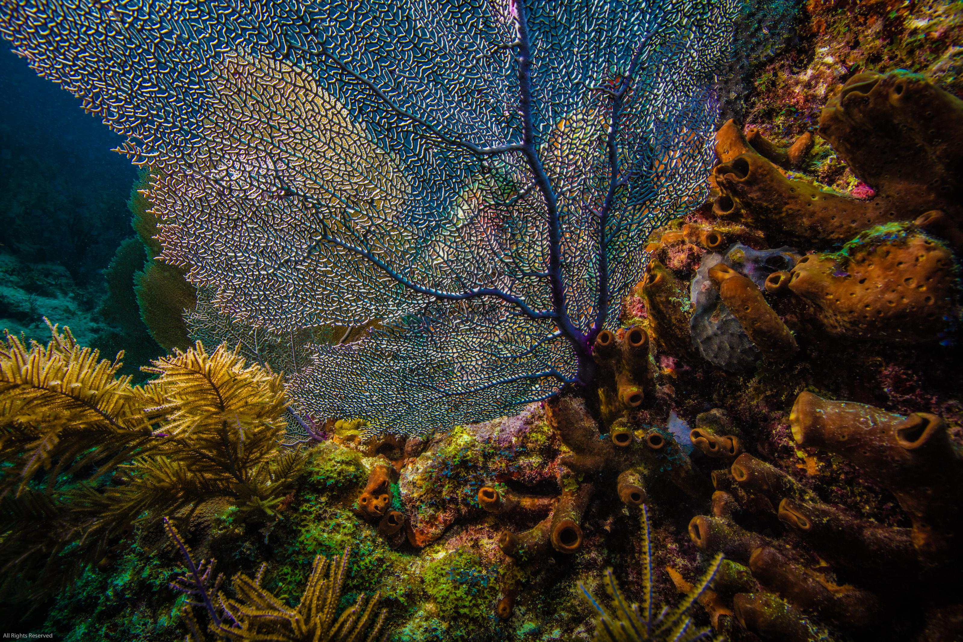 Coral Sponge