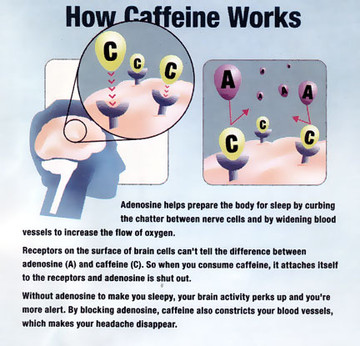 How Caffeine Works? - Ioanna Bai