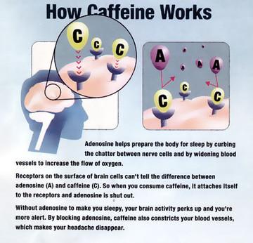 How Caffeine Works? - Ioanna Bai