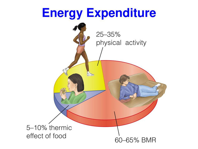 Energy Expenditure - Laiba Butt