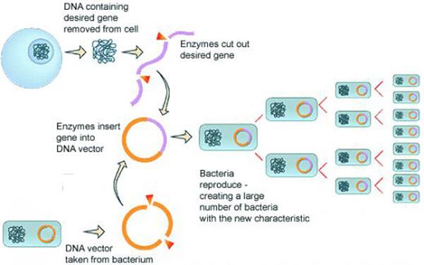 Molecular Cloning - Andrea Leite Camargo Santana