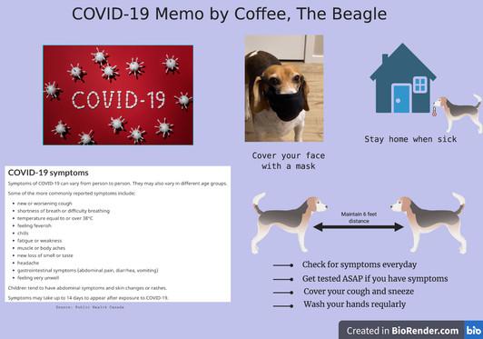 COVID-19 Memo - Coffee The Beagle