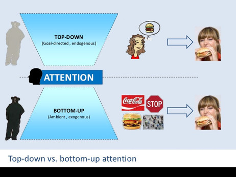 Top down vs bottom up attention - Sneha Shinde