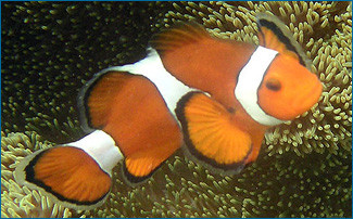 Gender bending fish - Alisha Gill