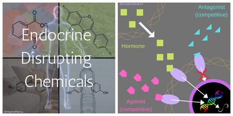 Endocrine disrupting chemicals - Megan Sieg