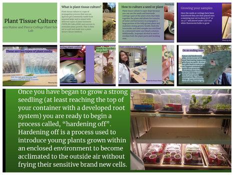 Plant tissue culture - Elnura Casey Maine