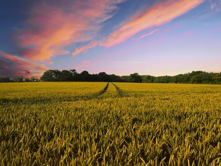 Assessoria no meio rural: saiba como a EMJEL pode auxiliar moradores e trabalhadores do campo.