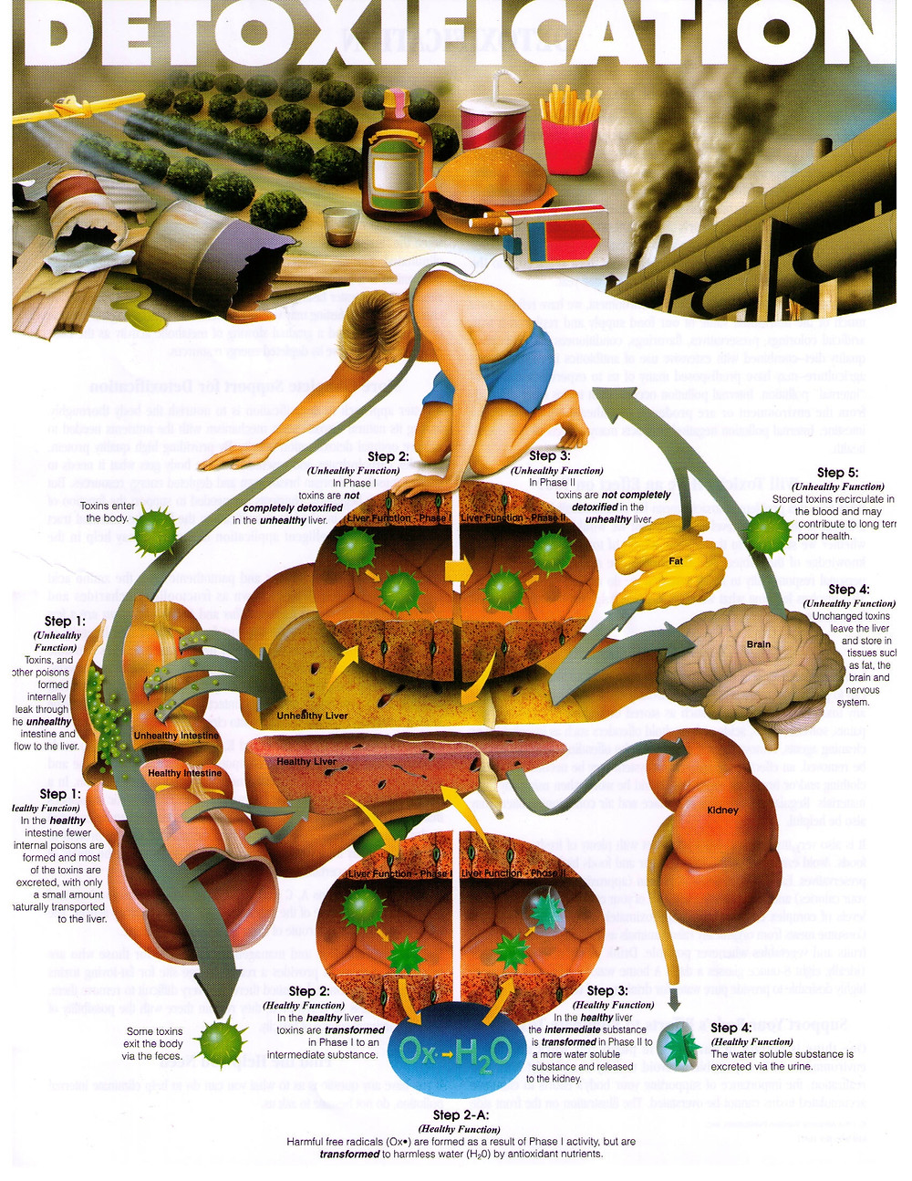 Healthy and unhealthy detoxification pathways in the body
