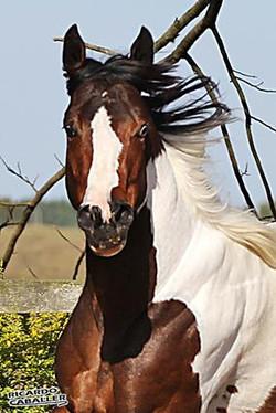 PAINT HORSE (3).jpg